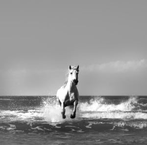 Fine Art Horse Photography