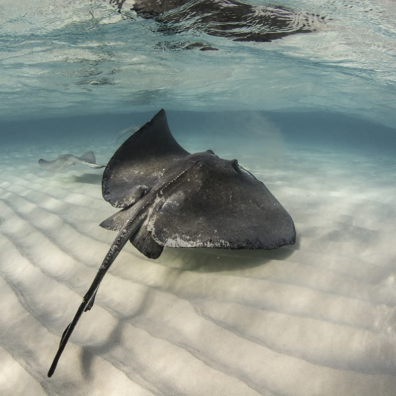Sting Ray City, Cayman Islands, by Nur Tucker